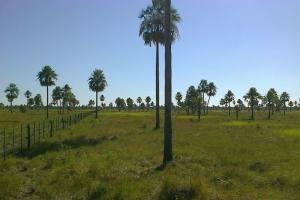 VentaAsunción (Paraguay) Villa Hayes